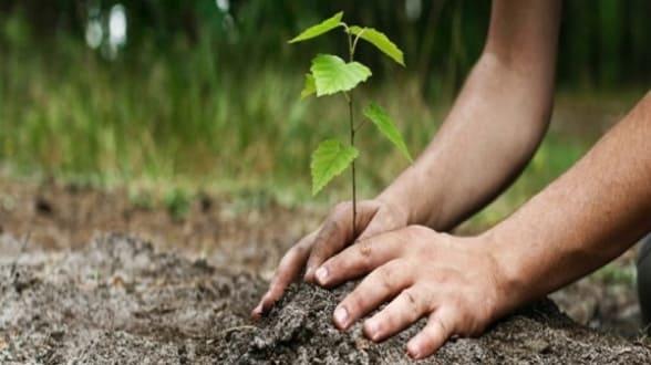 Un projet de 50millions d'arbres - Actualités Développement Durable