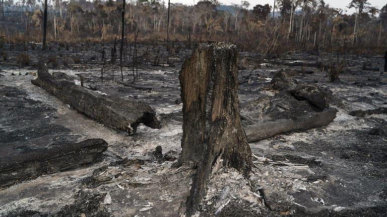 Amazonie : 20 millions d'euros pour lutter contre les incendies