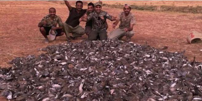 Les résultats de l'enquête sur la partie de chasse illégale à Marrakech