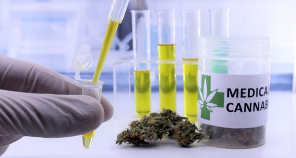 Usage médical du cannabis: le revenu net annuel pourrait atteindre les 110.000 DH par hectare
