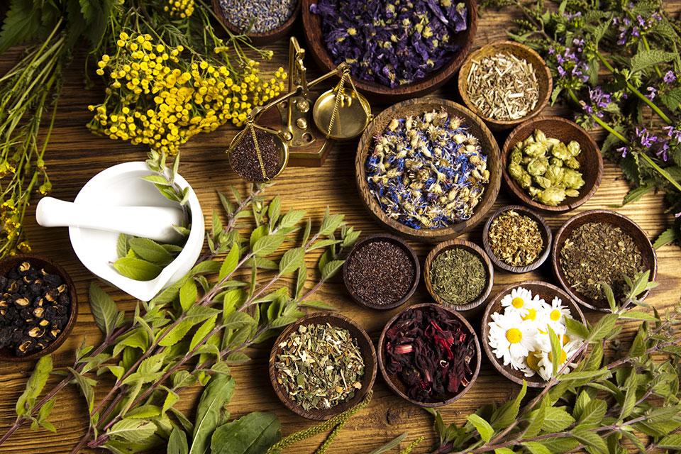 Plantes aromatiques et médicinales: la start-up Ecoquality Maroc étale ses cartes